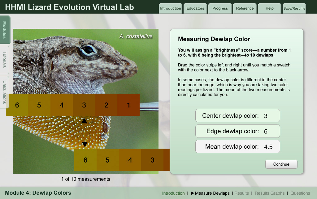 lizard labs design