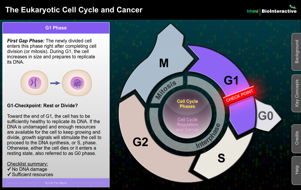 Cell Cycle Screenshot 2